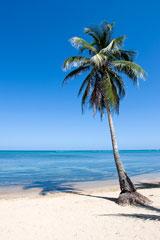 palm tree on a Caribbean island beach