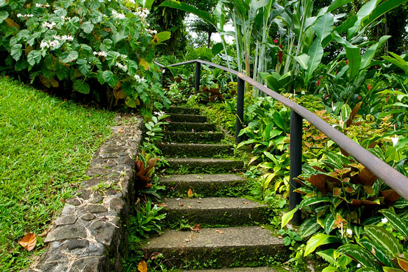 steps in a St Vincent botanical garden